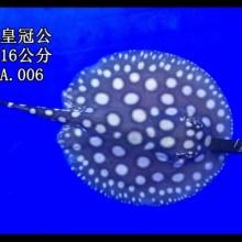 http://static3.longdian.com/201705/25/thumb_img/10662198_thumb_G_1495675580026.jpg
