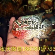 http://static3.longdian.com/201710/08/thumb_img/10668111_thumb_G_1507438369702.jpg