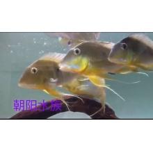 http://static3.longdian.com/201711/26/thumb_img/10670753_thumb_G_1511725864659.jpg