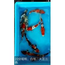 http://static3.longdian.com/201804/27/thumb_img/10675339_thumb_G_1524815565457.jpg